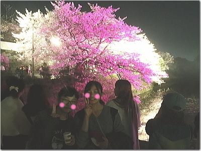 福岡城さくらまつりの夜桜ライトアップ☆超!綺麗!!桜も人も出店も賑わい過ぎの舞鶴公園へ♪