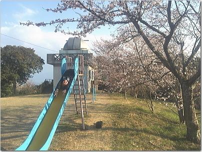 sakusakura8.jpg