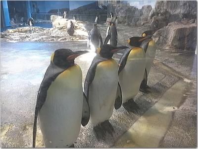 長崎ペンギン水族館へ!種類展示数が世界一!いろんなペンギンに癒されて締めは大村湾の夕陽☆長崎の旅完結♪