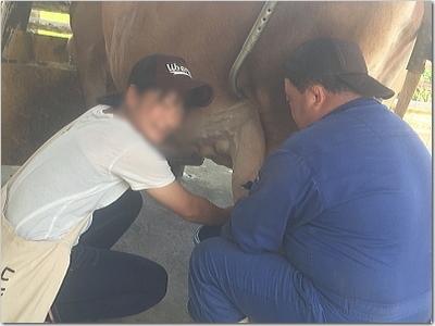 熱意家!初めての牛さんのお乳しぼりに大興奮!!(笑)乳牛のお乳のしぼり方!優しく!テクニシャンに〜☆